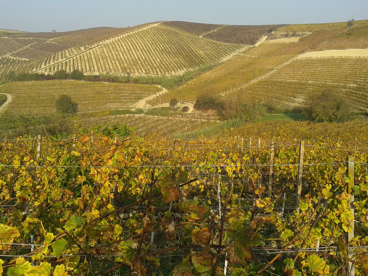 vineyards-667596_1280